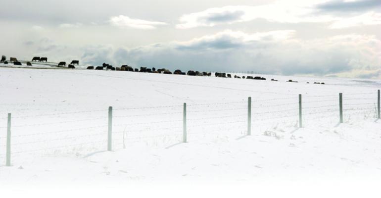 Early Winter Blast Helps Lift Cattle Markets