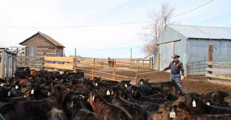 cattle herd health best practices