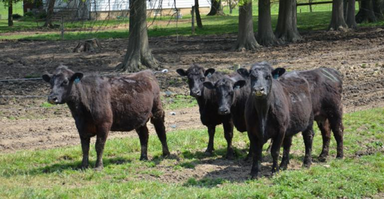 USDA reports cattle on feed up slightly; supply stays tight