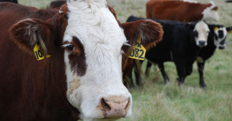 Great Plains leads cow herd expansion