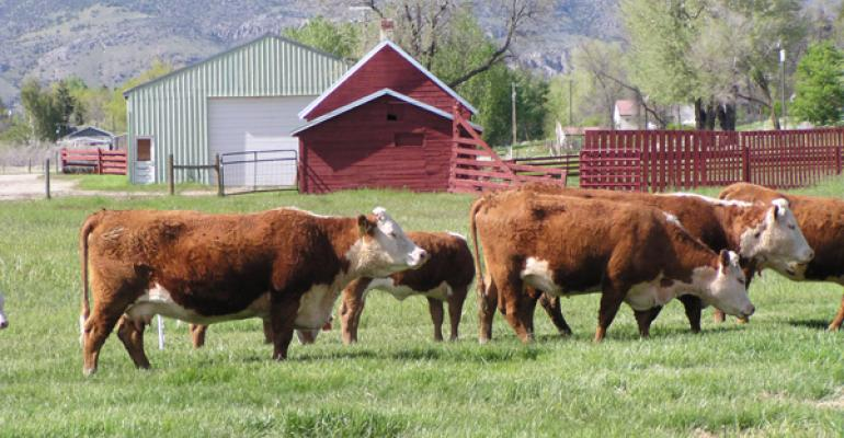 beef industry has opportunity to lead sustainability discussion