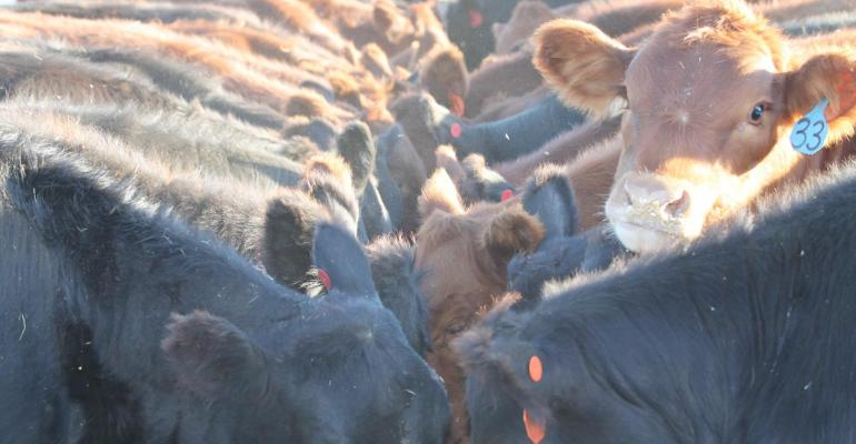 """Last day to vote for the best """"Bellied up to the feedbunk"""" photo; PLUS: 5 cattle nutrition resources"""