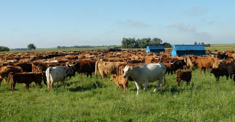 Grazing Series Part 2: Extensive vs. moderate grazing, effective cross-fencing & more