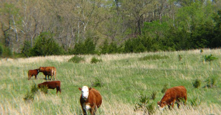 Grazing Series Part 1: 3 tips for spring hay & pasture management