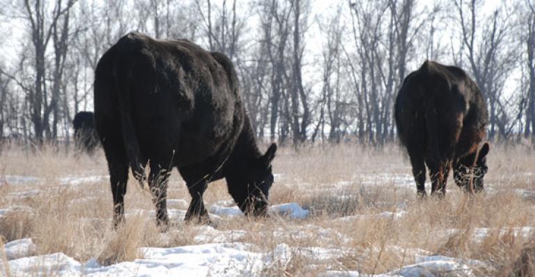 6 steps to low-input cow herd feeding