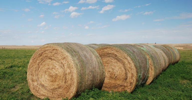 Hay & forage growers anxiously await Mother Nature's spring play