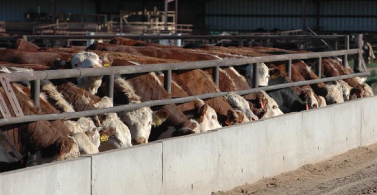 Feedlot placements below expectations