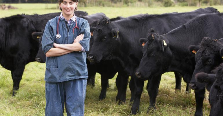 Summer Herd Health Part 3: Ranchers seeking large animal vets for maintaining herd health