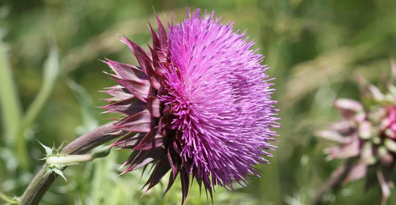 5 resources for choosing the best method to control noxious weeds