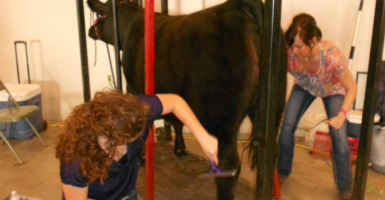 Why coaching character is more important than winning cattle shows