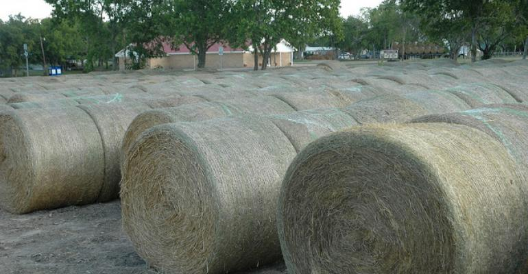 Hay Talk Part 1: Why cutting height and moisture levels matter