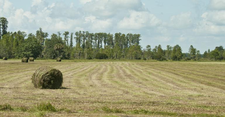 Hay Talk Part 3: Troubleshooting rain-damaged hay & inadequate fermentation