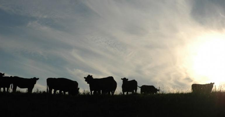 Sustainability: The beef industry is leading from the front