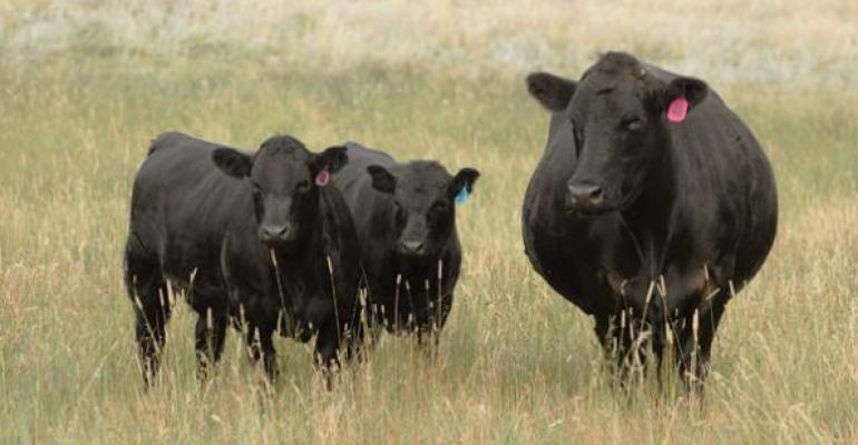 2015 is the year to focus on all calf marketing options