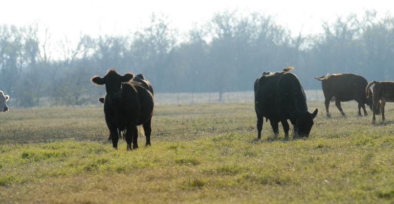 3 tips for being a better pasture manager