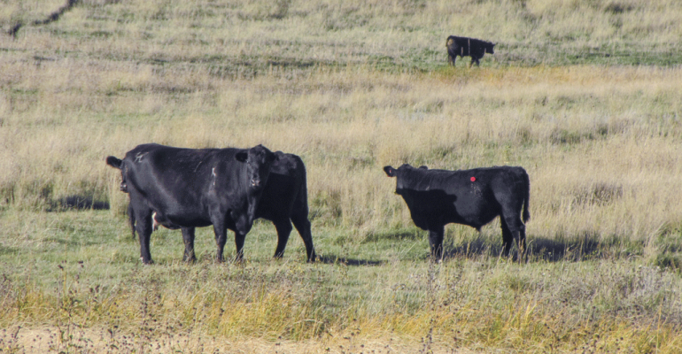 Busting fall pasture bloat