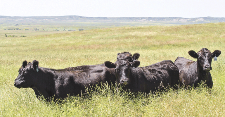 Crunch the numbers before you buy those heifers