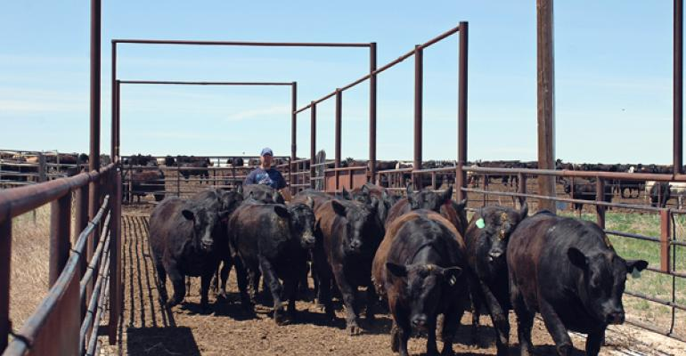 Cattle futures chase calf and feeder prices lower