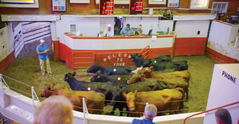 Is the cattle market whiplash over?