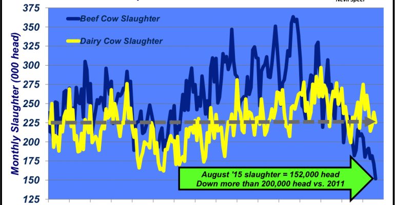 Cow slaughter unknowns continue; will more cows head to town?