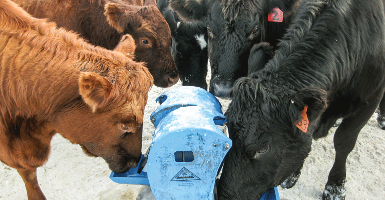 How to let your cattle pump their own water