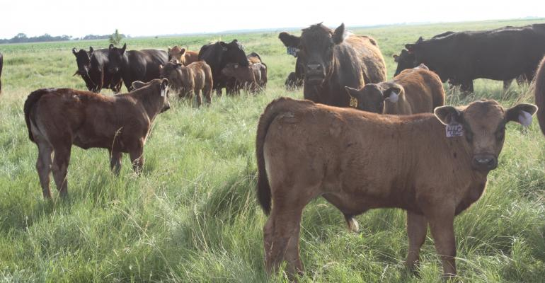 5 weaning resources for cow-calf producers