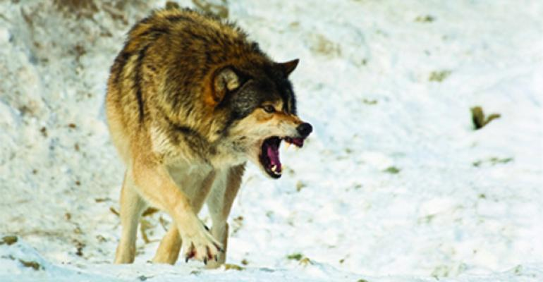 Do non-lethal control methods reduce wolf depredation? Ranchers say no