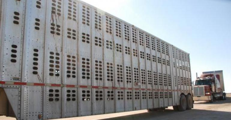 Cattle prices move higher across the board