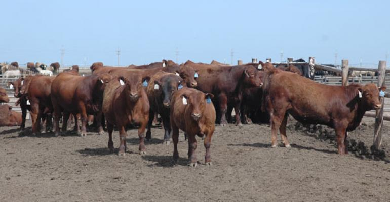 Cattle feeders are enduring record losses
