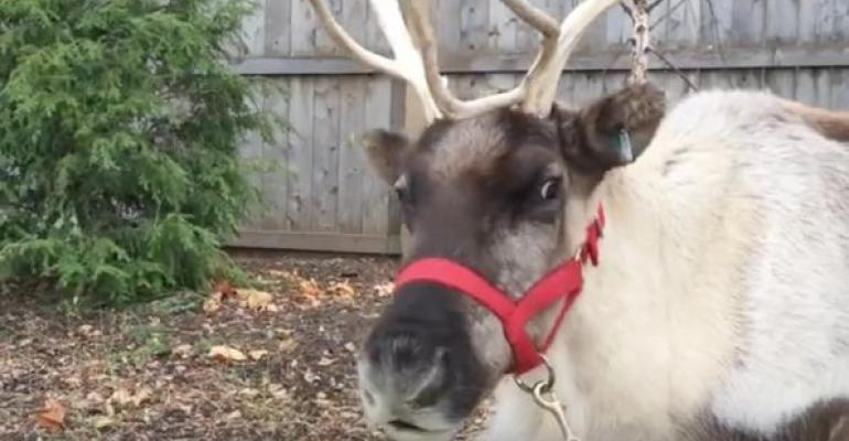 VIDEO: Are Santa's reindeer healthy for Christmas flight?