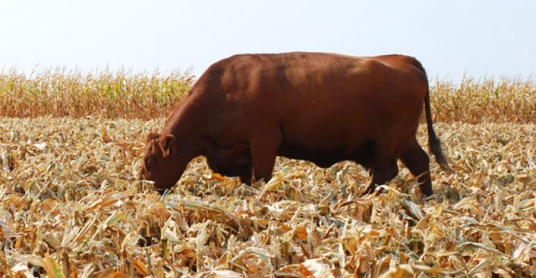 Does confinement feeding cows pencil out as an alternative production method?