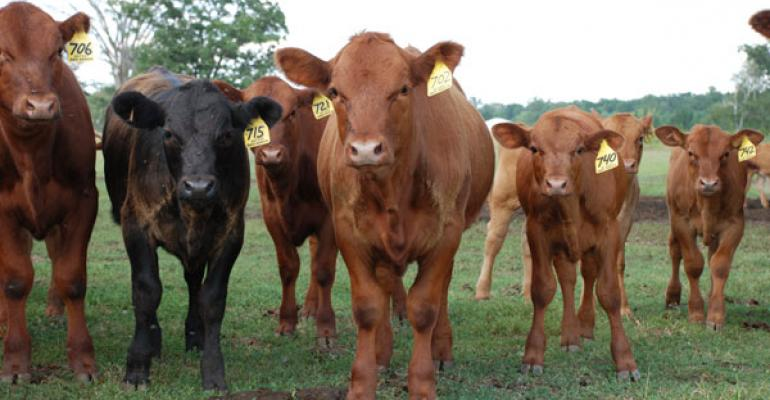 Grass-fed growth brings challenges, opportunity and a few fringe benefits