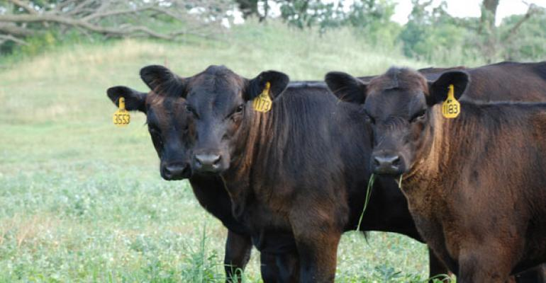 Calf and stocker prices continue higher