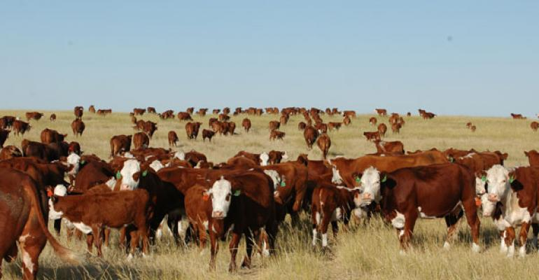 Beef cow numbers up 3% for United States-Canada