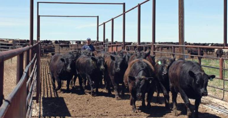 Price implications of the next cattle cycle