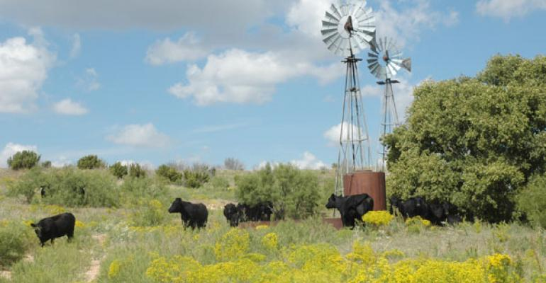 Why you can't have beef sustainability without grazing management
