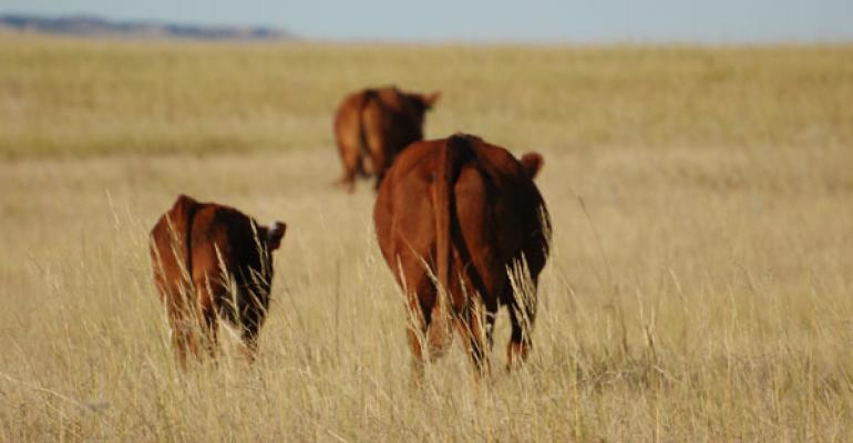 cow calf profits