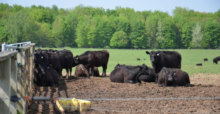 5 paths to success for U.S. meat producers