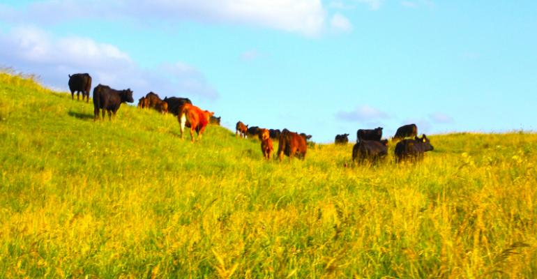 Pasture management a positive story for beef producers to tell