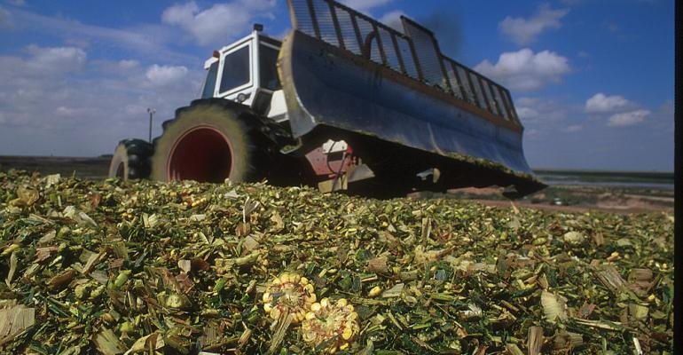 Corn silage might be the top feedstuff this year