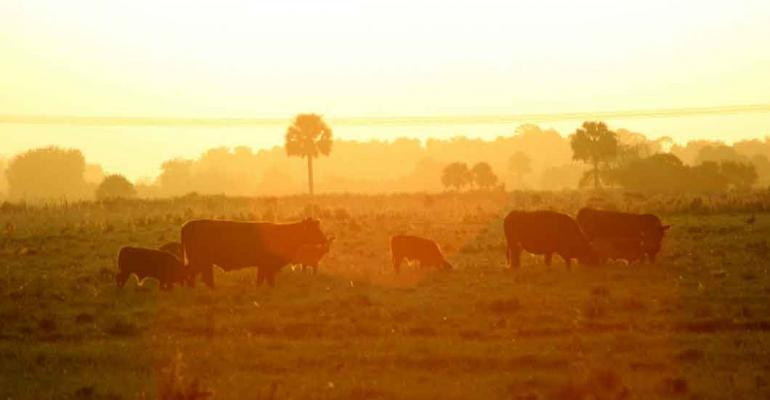 """Vote for your favorite """"Cattle & Colors"""" photo now!"""