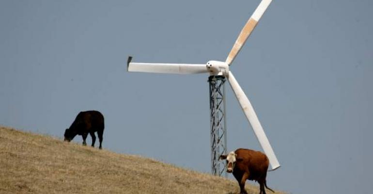 Cattle and wind energy