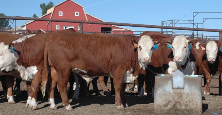 Increased production challenges beef demand