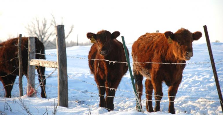 Beware of winter risks when grazing stockpiled forages