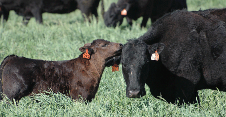 Research in Texas is showing that on managed pastures with rotational grazing and cover crops not only is soil health increasing but the pastures also produce more carrying capacity with fewer cows There is also more total gross revenue than continuously grazed pastures