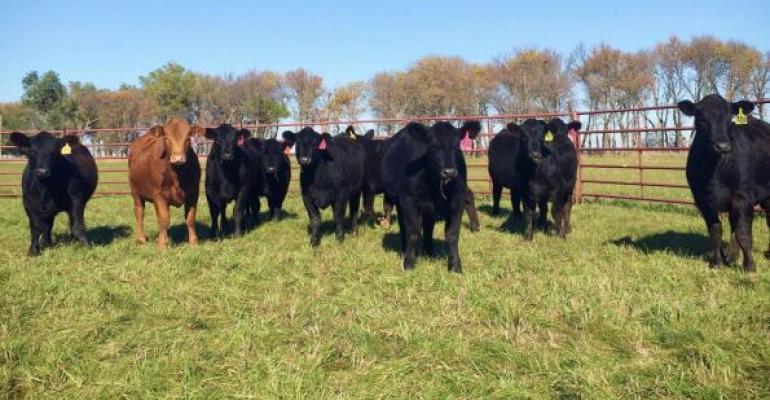 3 marketing options for the fall calf run