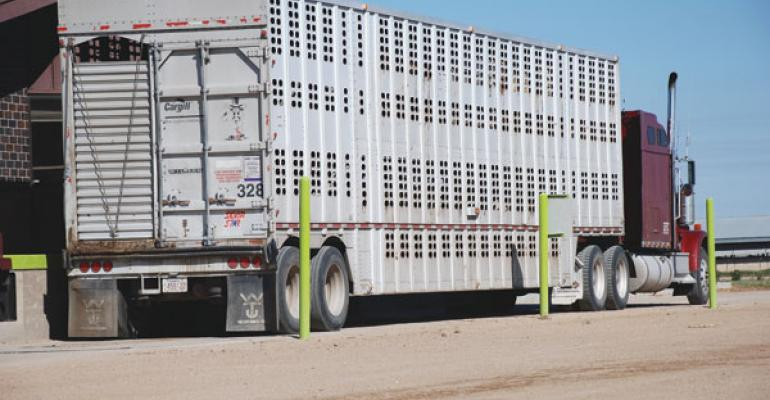 Cash cattle and futures prices decline