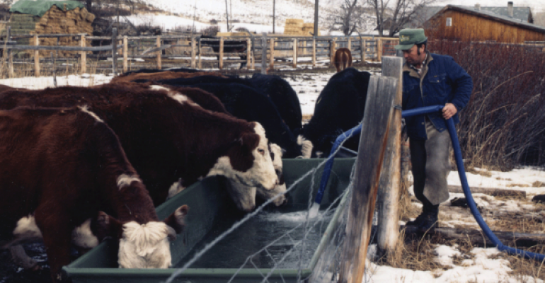Clean water is crucial for cattle in winter months