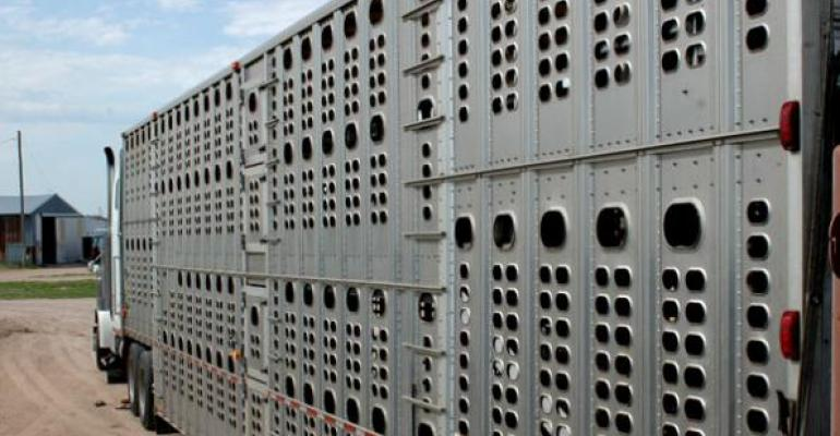 Cattle feeders hit the gas pedal on fed cattle marketings