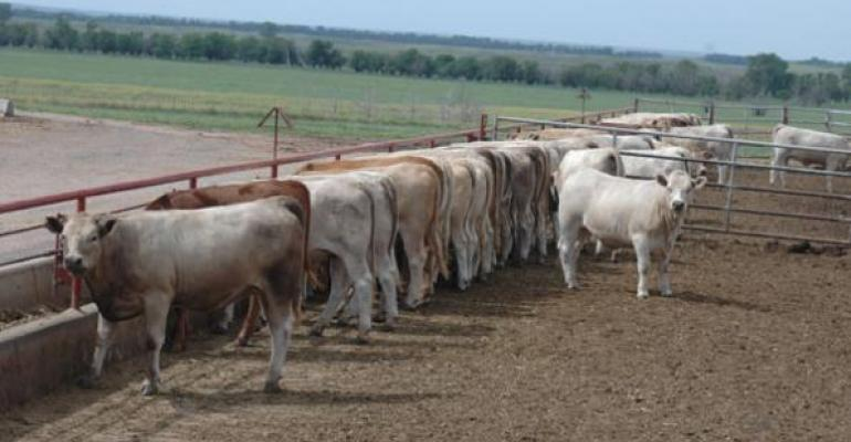 Beef producers: Ask the right questions